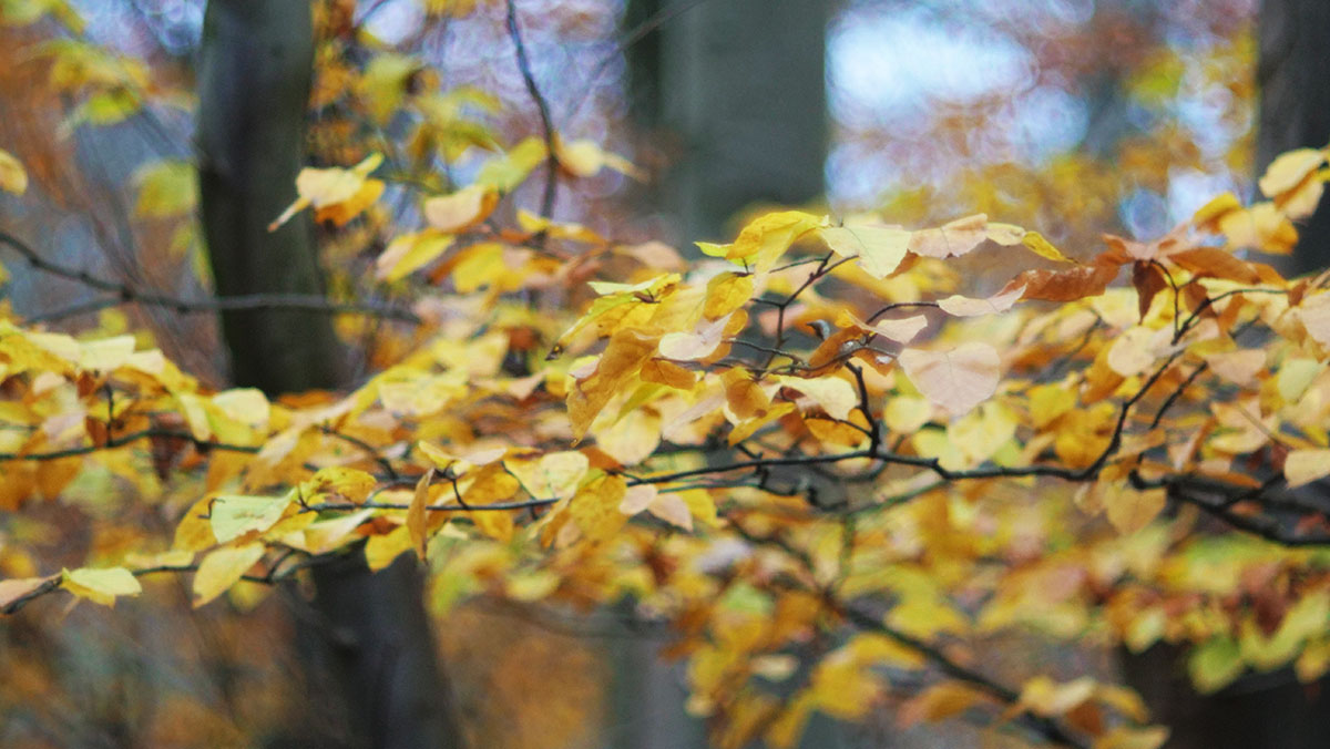 Herbst-Poesie (Cyclop 85mm f1.5)