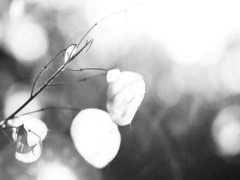 Winter-Poesie (Cyclop 85mm f1.5)